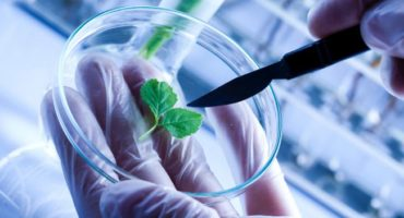 Modern agricultural biotechnology calling